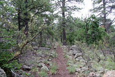 Bill Williams Mountain Hike: Image 15