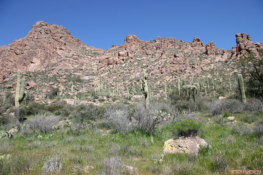 Bluff Spring Loop Hike: Image 70