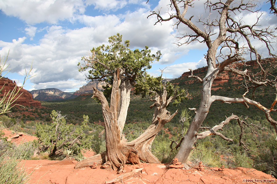 Boynton Canyon Hike: Image 53