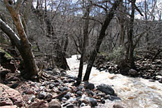 Fossil Springs Trail Hike: Image 28
