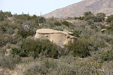 Soldier Camp Trail Hike: Image 26