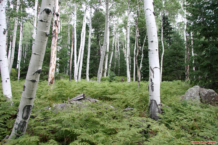 Kachina Trail Hike: Image 13