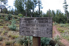 Pine Canyon Trail Hike: Image 4