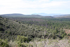 Pine Canyon Trail Hike: Image 19