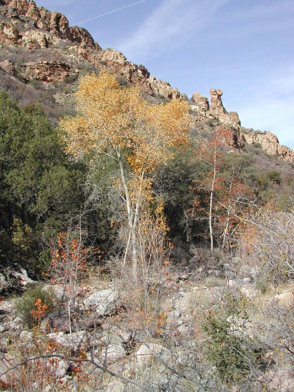 Rogers Canyon Hike: Image 8