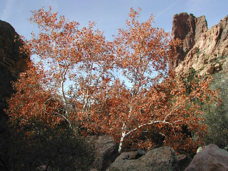 Rogers Canyon Hike: Image 10
