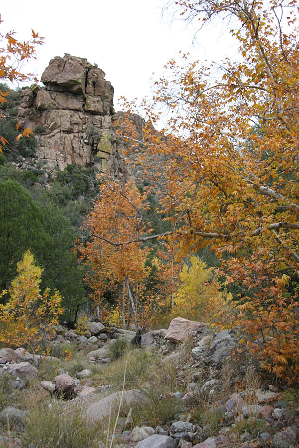 Rogers Canyon Hike: Image 15