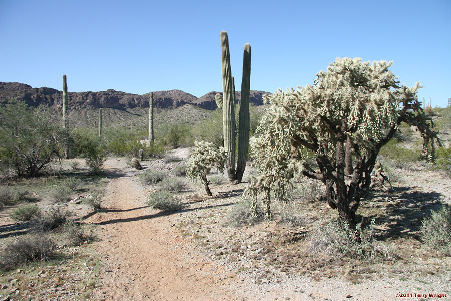 San Tan Malpais Trail Hike: Image 6
