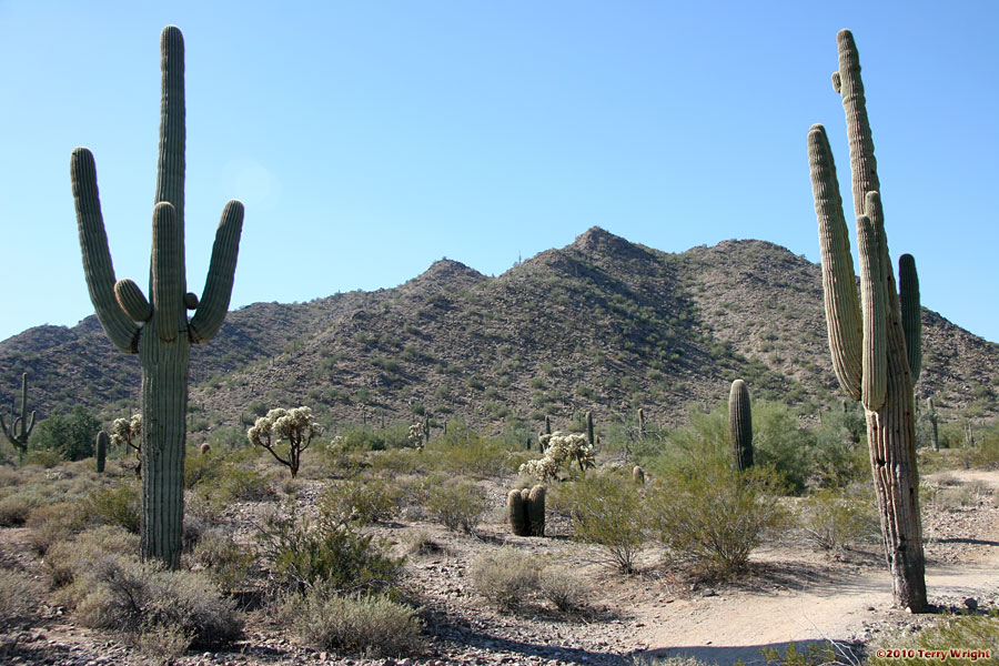 San Tan Loop Hike: Image 10