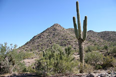 San Tan Loop Hike: Image 16