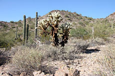 San Tan Loop Hike: Image 20