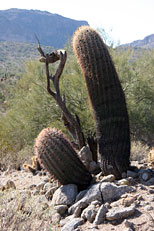 San Tan Loop Hike: Image 22
