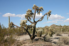 San Tan Loop Hike: Image 23