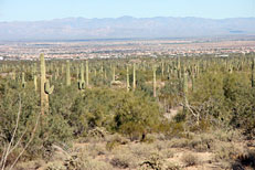 San Tan Loop Hike: Image 31