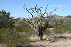 San Tan Loop Hike: Image 35