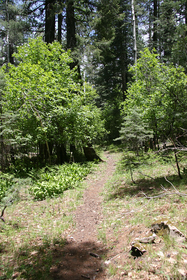 See Canyon Trail Hike : Image 34