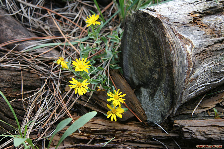 South Fork Trail Hike: Image 15