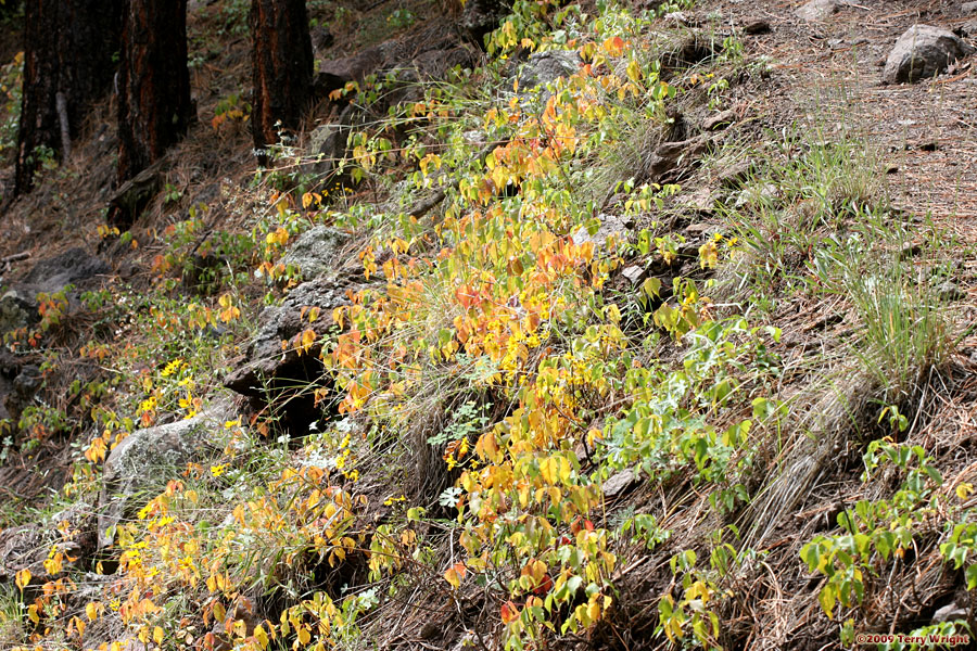 South Fork Trail Hike: Image 35