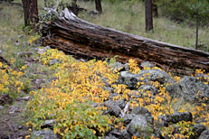 South Fork Trail Hike: Image 53