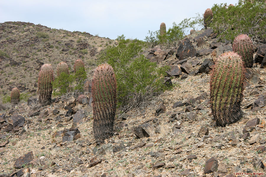 Bursera-National-Pyramid Loop Hike: Image 6