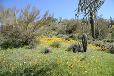 Spring Valley Trail Hike: Image 15