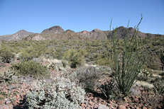 Arizona Archaeology Awareness Month Hike: Image 1