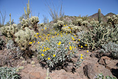 Arizona Archaeology Awareness Month Hike: Image 8