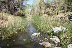 Arizona Archaeology Awareness Month Hike: Image 15