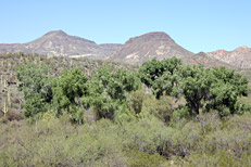 Arizona Archaeology Awareness Month Hike: Image 16
