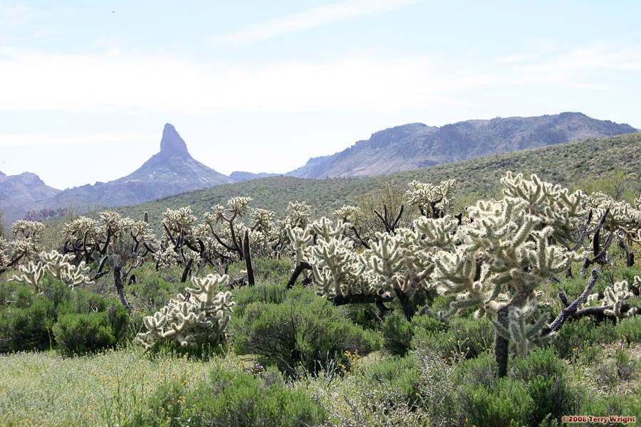 Black Mesa - Dutchman's Trail Loop Hike: Image 28