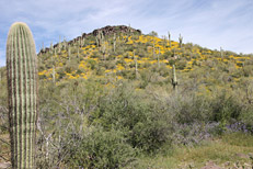 Black Mesa - Dutchman's Trail Loop Hike: Image 30