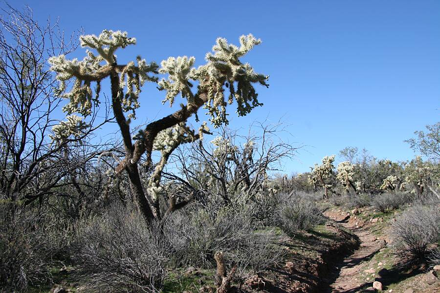 Dutchman's - Black Mesa Loop: Image 25