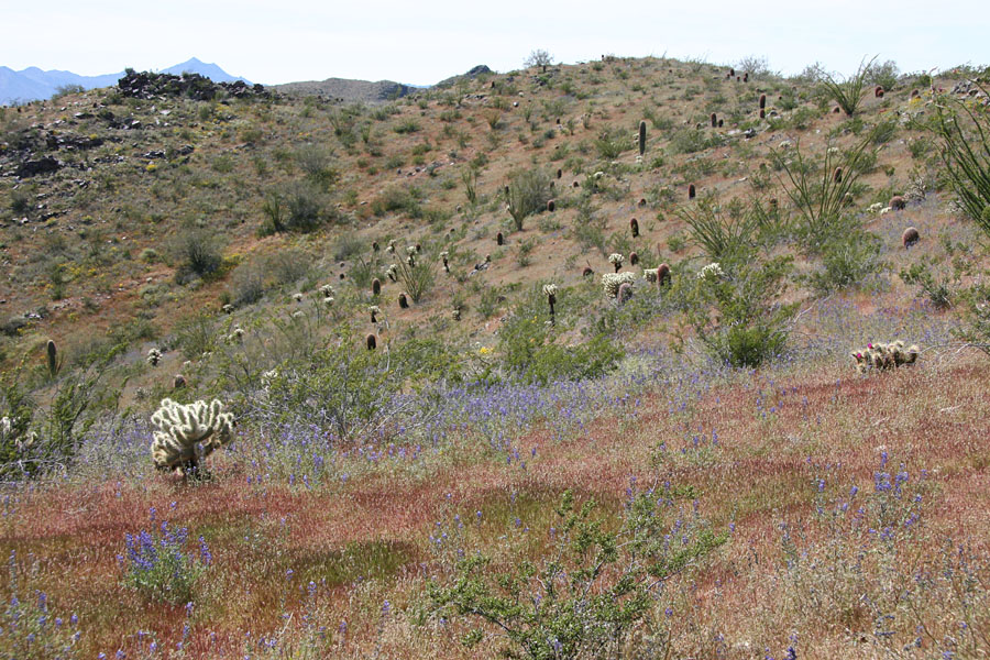 Telegraph Pass / National Trail Hike: Image 26
