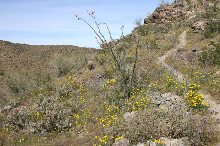 Telegraph Pass / National Trail Hike: Image 39