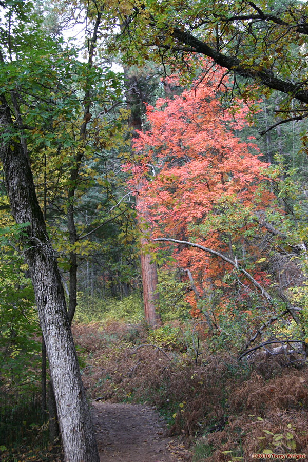 West Fork Trail Hike: Image 17