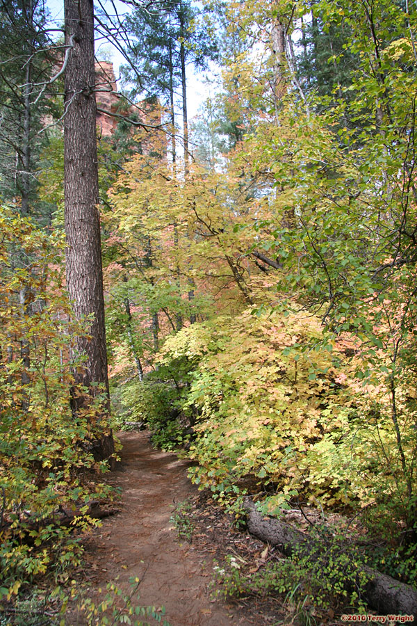 West Fork Trail Hike: Image 34